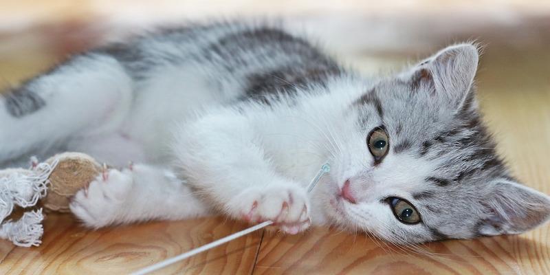 魅了する猫